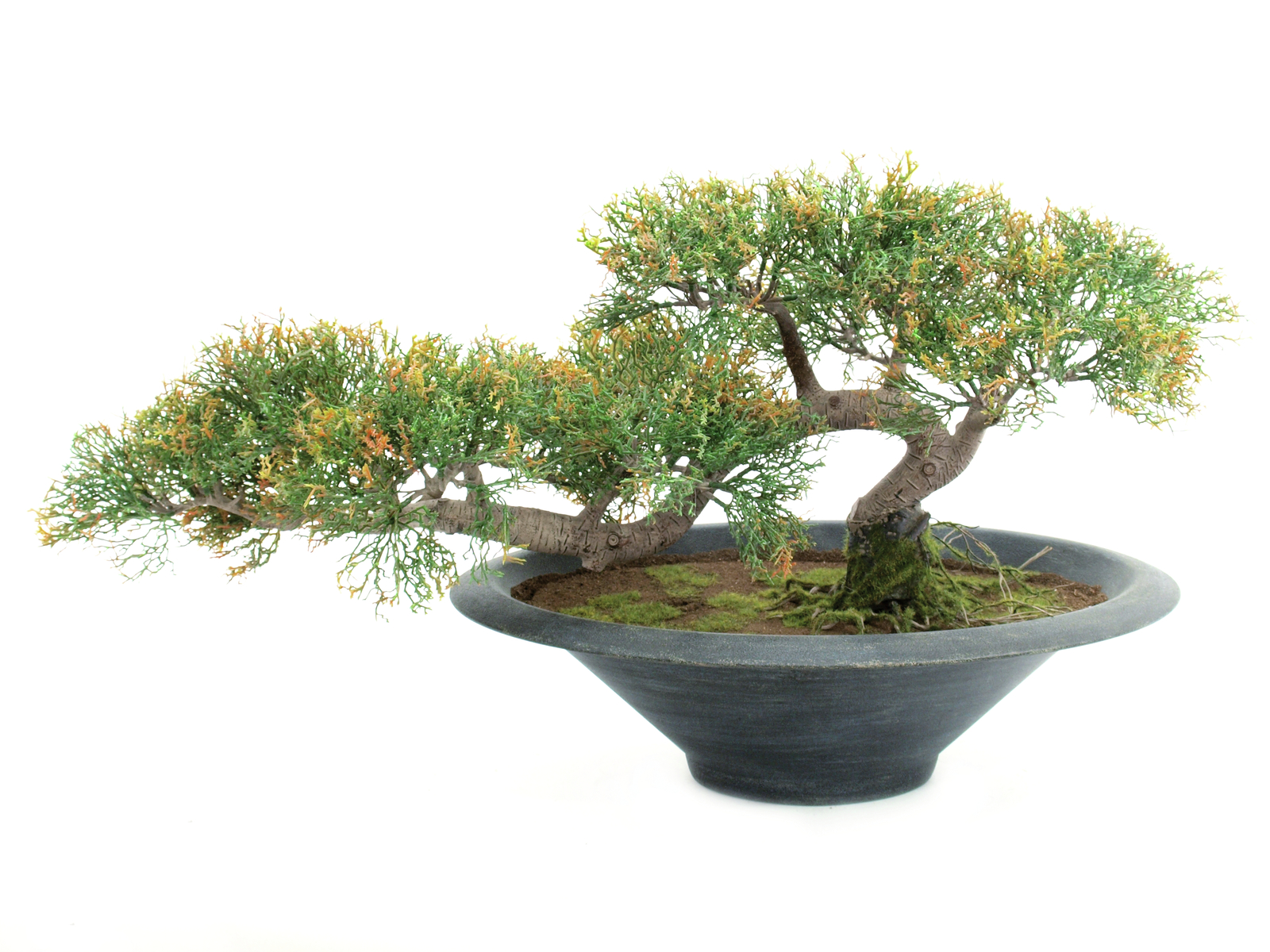 EUROPALMS Bonsai-Zeder, Kunstpflanze, 40cm