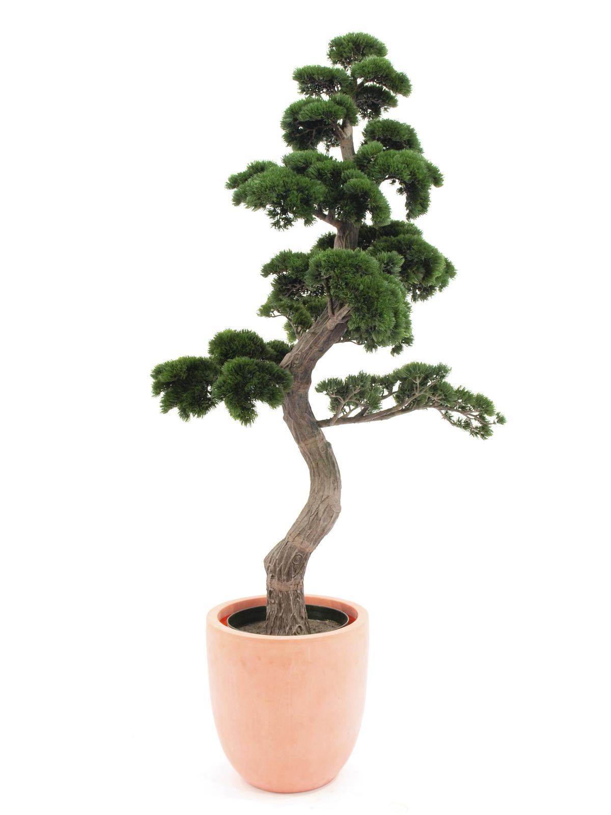 EUROPALMS Pino Bonsai, 168cm