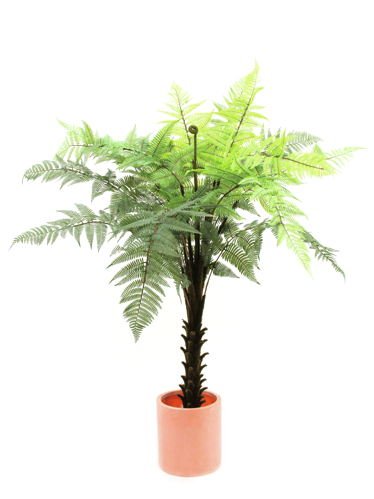 EUROPALMS pianta artificiale Woodwardia albero tropicale, 180cm