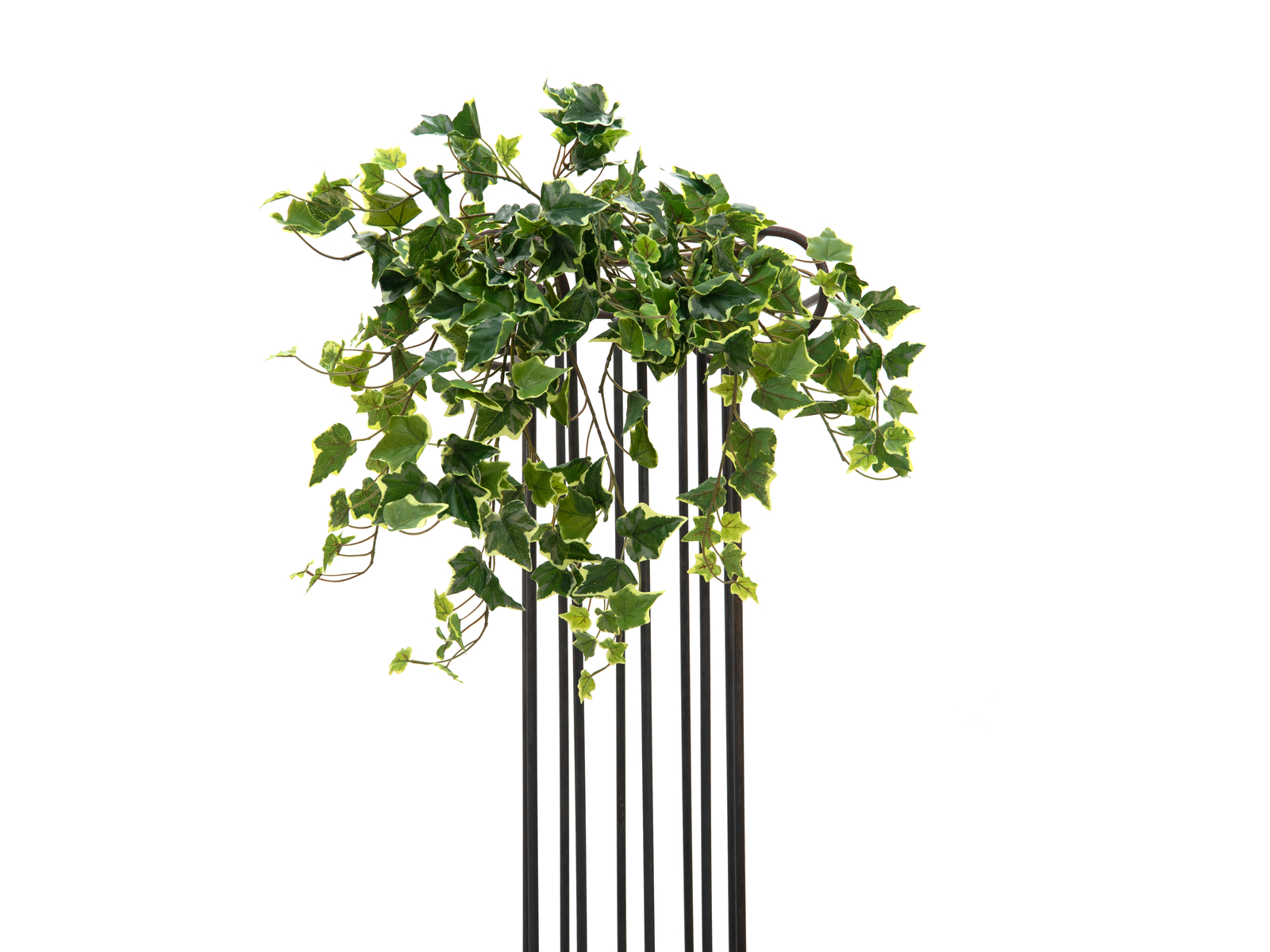 EUROPALMS Hollan Ivy Bush, Premium, 50cm