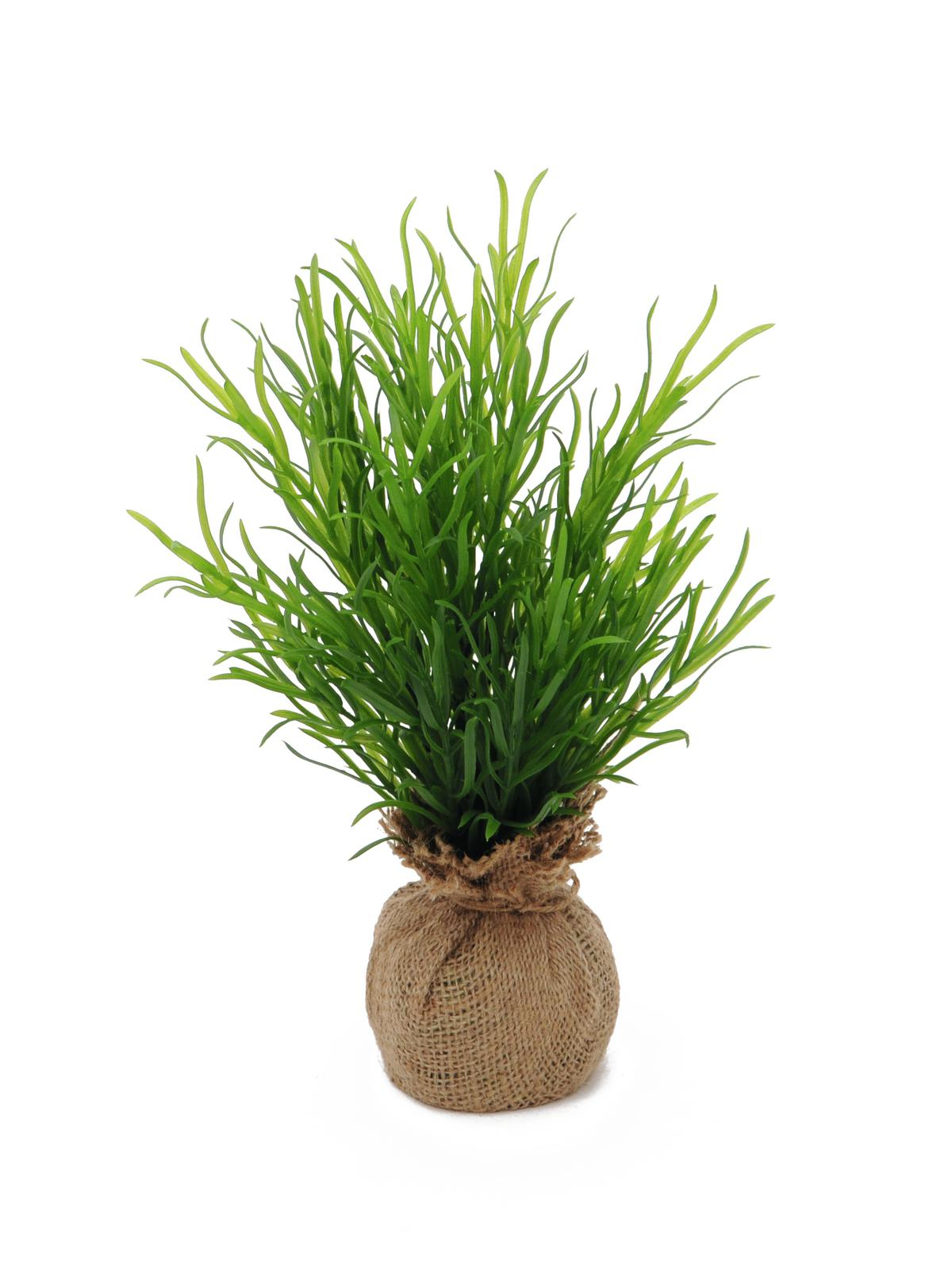 EUROPALMS Dragoncello bush, 30cm
