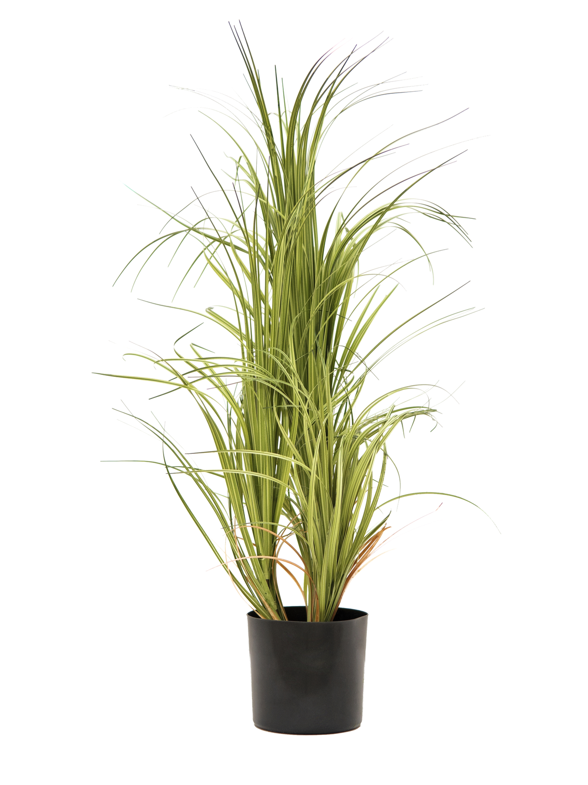 EUROPALMS pianta artificiale Dracena  80cm