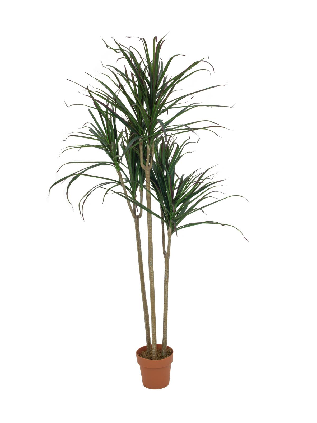 EUROPALMS pianta artificiale  Dracaena, verde, 180cm