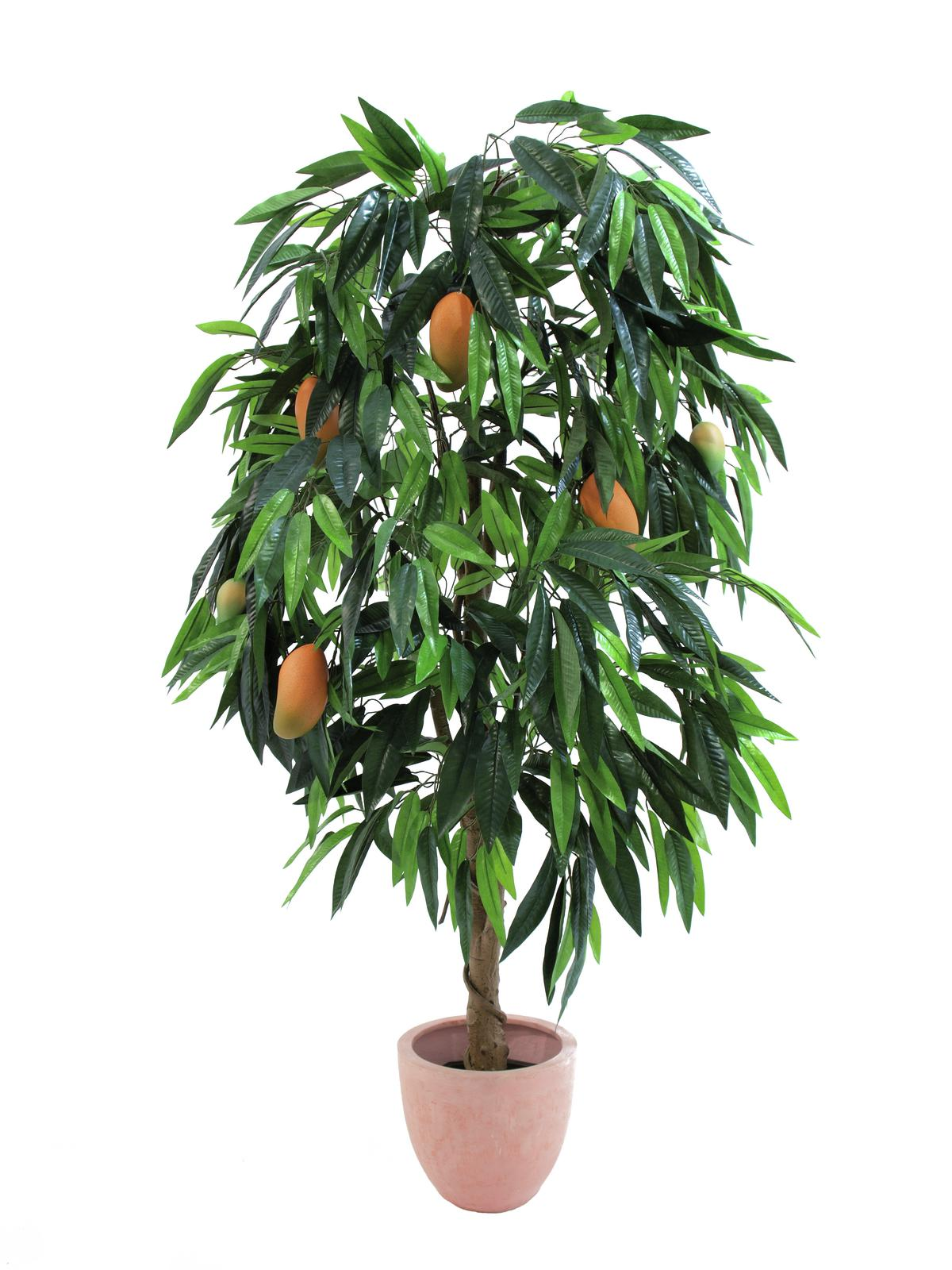 EUROPALMS Artificial plants Mango tree with fruits, 165cm