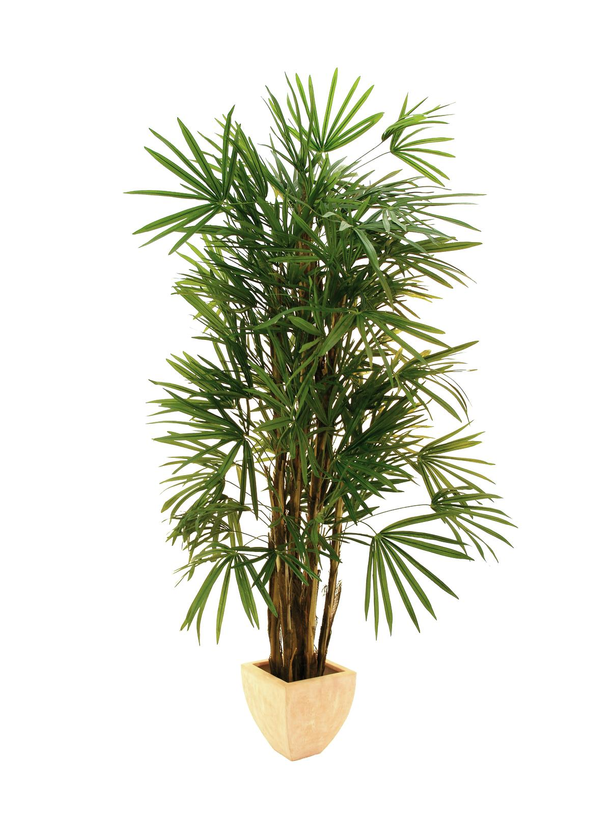 EUROPALMS pianta artificiale palma lady, 210cm