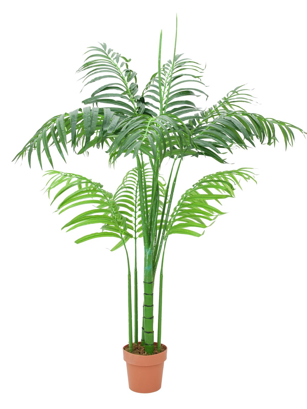 EUROPALMS pianta artificiale  palma Areca, 180cm