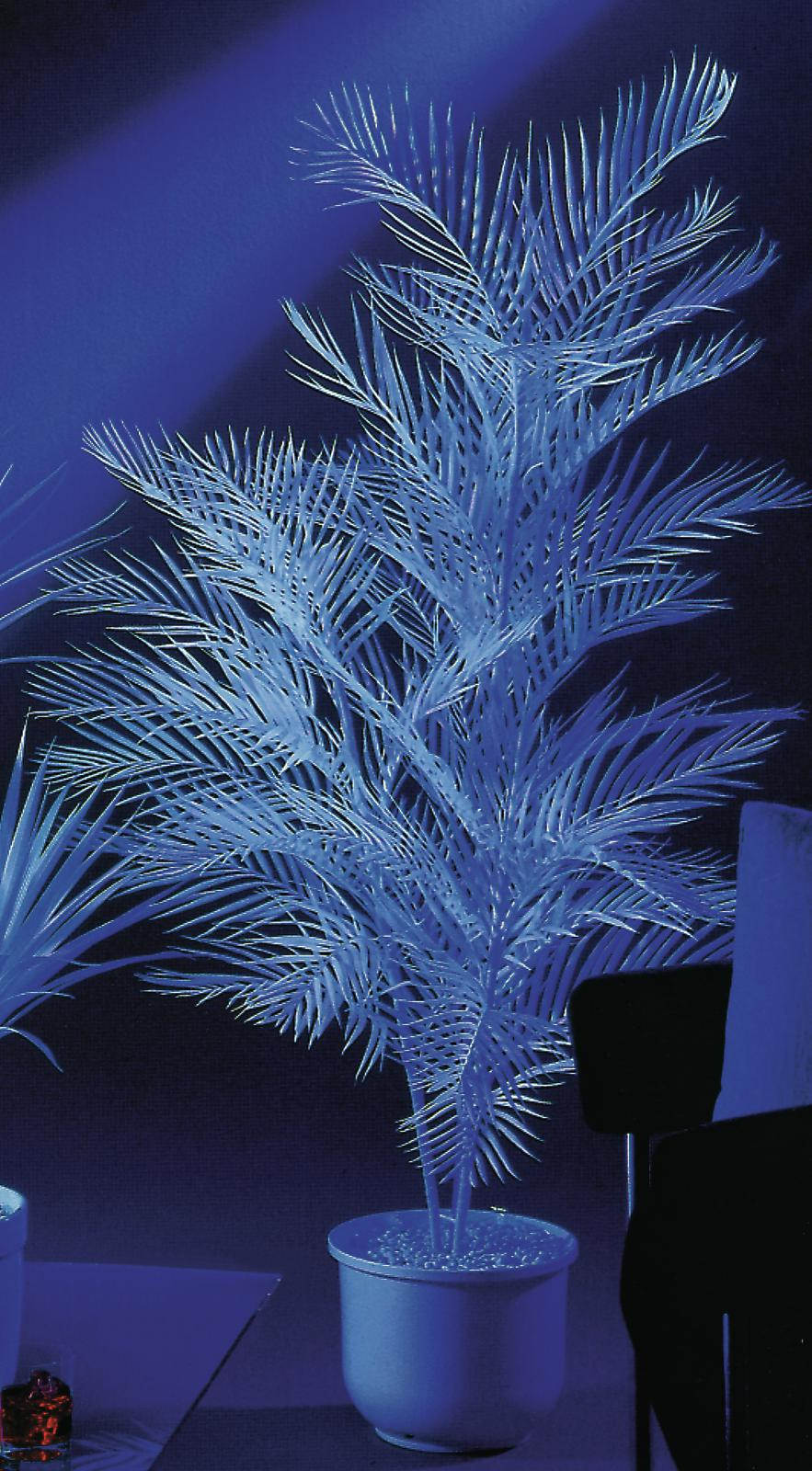 EUROPALMS pianta artificiale palma di Kentia, uv-bianco, 90cm