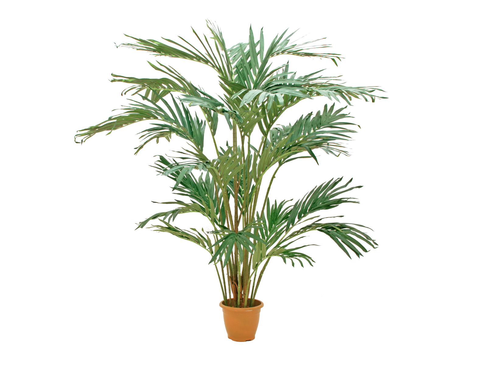 EUROPALMS Canary date palm, artificial plants, 240cm