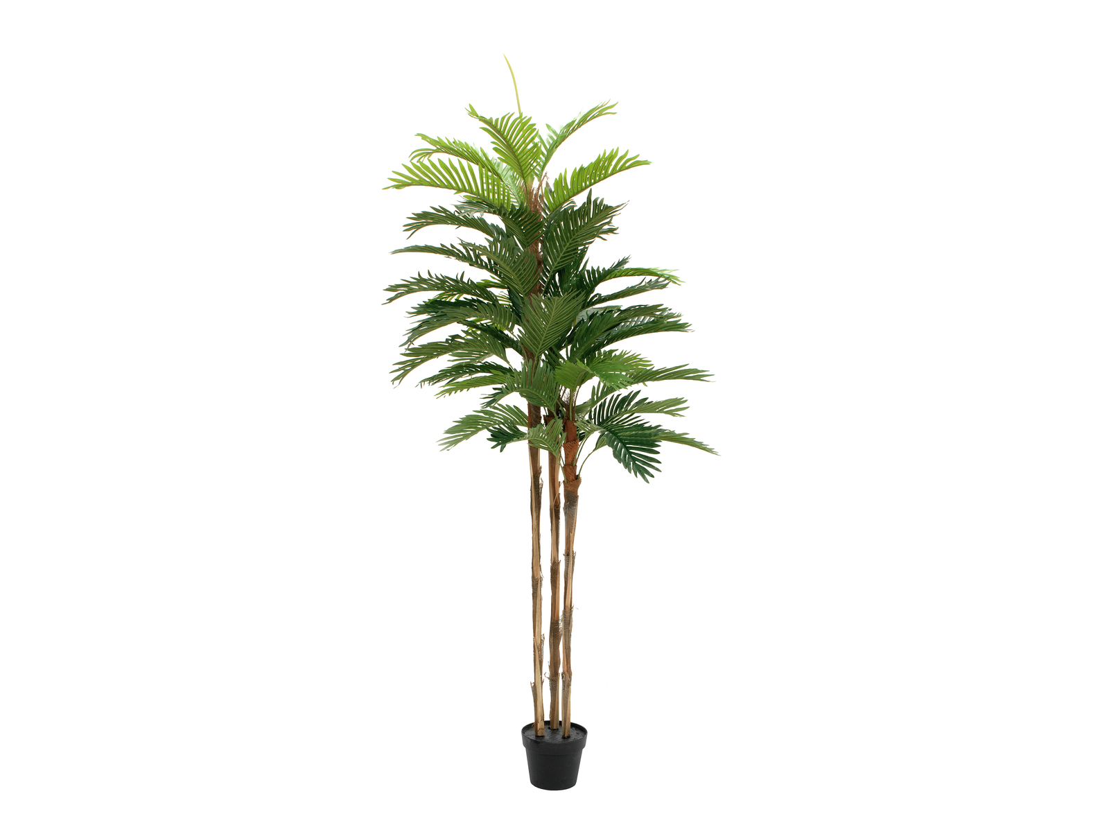 EUROPALMS Kentia di palme, piante artificiali, 180cm