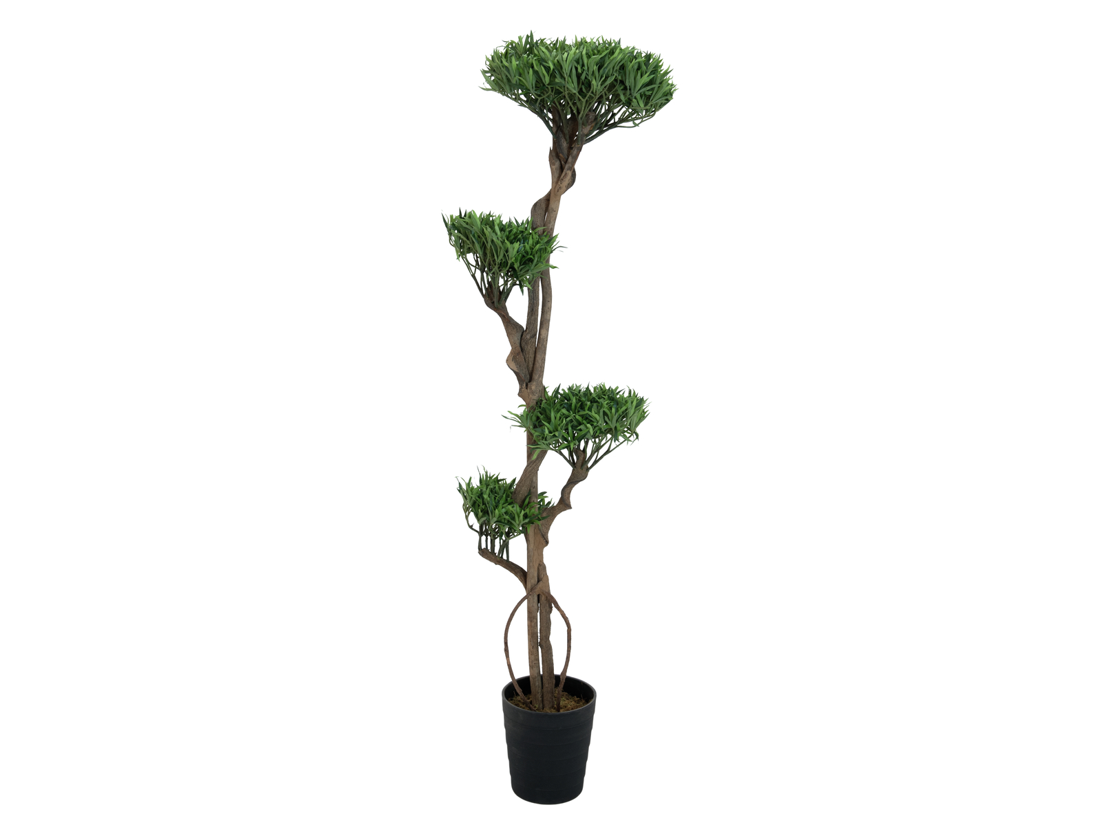 EUROPALMS albero Bonsai, multi tronco, 170cm