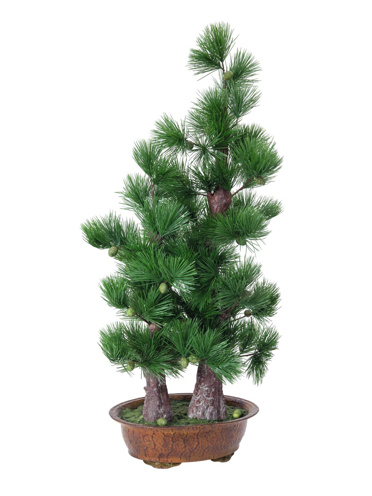 EUROPALMS Pino bonsai, 95cm