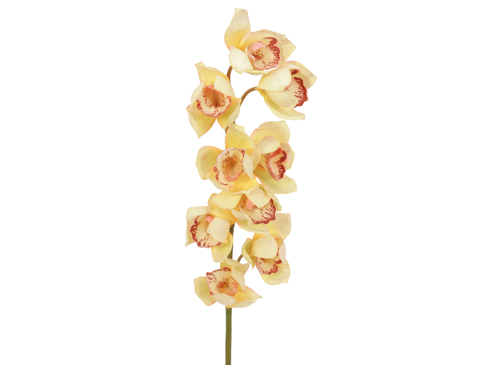 EUROPALMS Cymbidium spray, giallo, 90cm