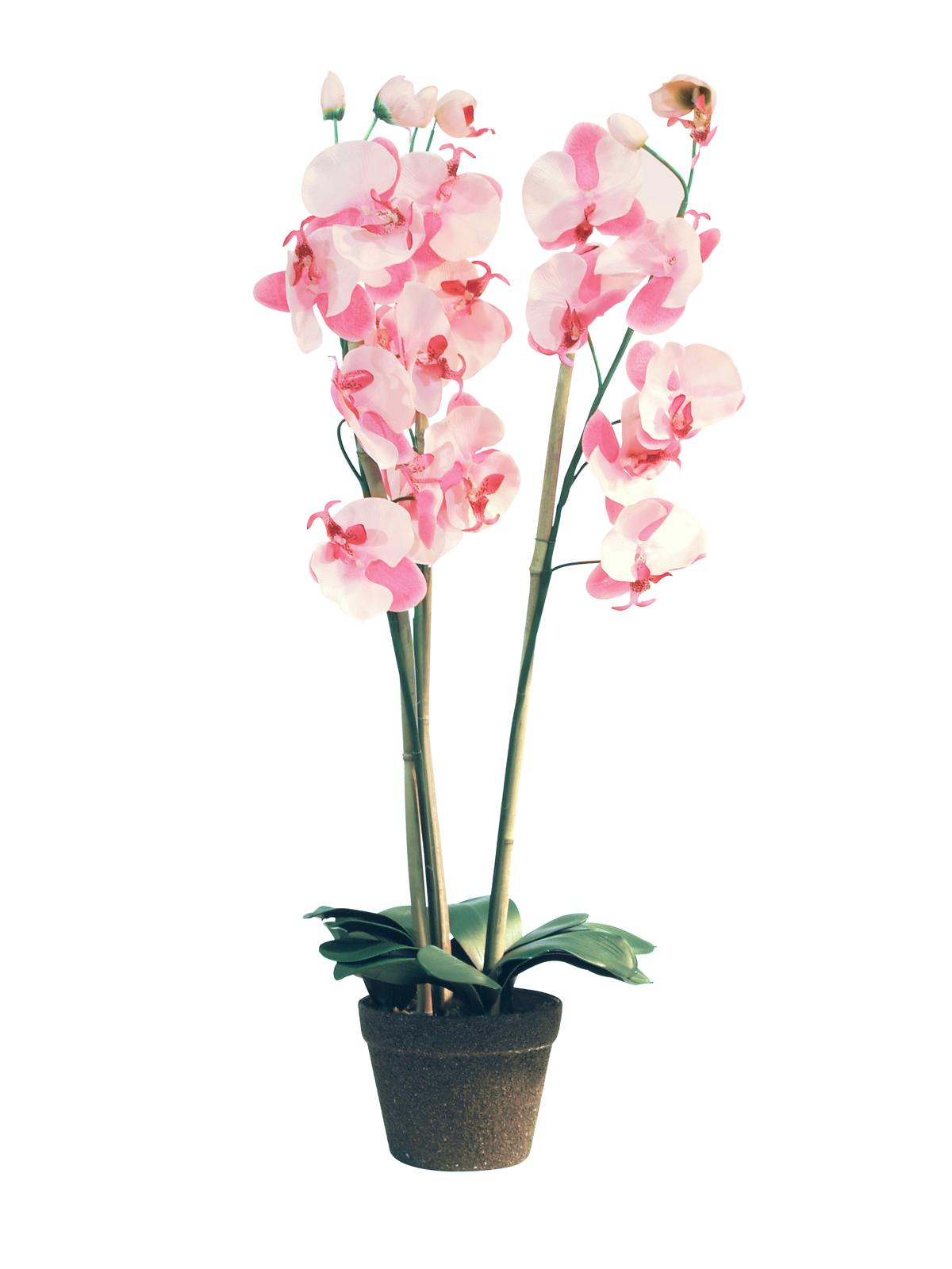 EUROPALMS pianta artificiale Orchidea, rosa, 80cm